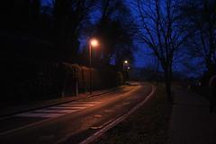 DSC_0216 (lorenzo.monti1988) Tags: foglie alberi torino nikon strada lampioni sera senza d3000