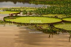 NO_Manaus0424 (Visit Brasil) Tags: travel brazil tourism horizontal brasil amazon rainforest natureza vitriargia manaus norte amazonas detalhe ecoturismo externa semgente diurna riosolimes visitbrasil
