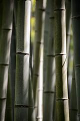 Bamboo Forest (lenanu) Tags: light shadow macro tree green lines japan closeup japanese licht kyoto asia asien outdoor bamboo minimal grn minimalism schatten baum nahaufnahme bambus bambooforest linien japanisch drausen bambuswald lenanu