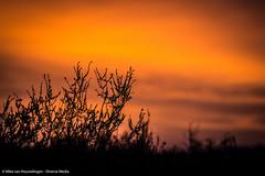 Posbank 31-01-'16 (Mike van Houwelingen - DiverseMediaNL) Tags: morning sky orange sunrise gold golden early postbank diverse hour lucht gouden veluwe posbank ochtend oranje zonsopgang goud uur vroeg diversemedia diversemedianl rt310116