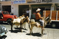 Mexico, mules and their driver (rossendale2016) Tags: road street man mexico transport donkey lottery vehicle driver miles bags ropes tied rider mules saddle hoofs transporting sacks hooves nationa secured reins