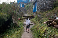 A tree carrier (Pooja Pant) Tags: nepal mountains beautiful trek abc annapurna annapurnabasecamp macchapuchre