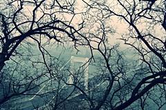 semitransparent (palinta) Tags: city bridge blue winter tree town view branches budapest brach