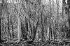 subtle structures of order (lumofisk) Tags: 50mm struktur structure subtle 0mmf0 nikondf essigrohr blackandwhitemonochrometangleoutdoor