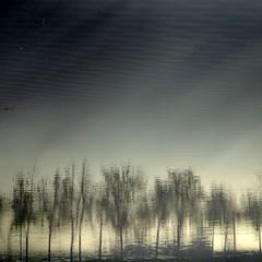 Tarde de invierno (acativa) Tags: trees water ro reflections river agua rboles textures galicia cielo invierno ros pontevedra texturas reflejos airelibre lrez rolrez acativa