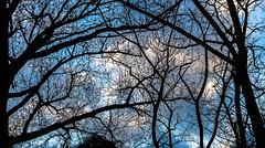 (DEMONTIS'Photos) Tags: autumn winter tree alberi branch branches magic inverno ramo autunno rami magia