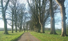 Avenue (Martha-Ann48) Tags: trees house green grass fence spring bare branches snowdrops trunks beech wold nafferton aconites