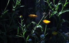 Light meter testing (JayVeeAre (JvR)) Tags: flower picasa3 johnvanrooygmailcom johnvanrooy gimp28 canonpowershotsx60hs johannesvanrooy httpwwwflickrcomphotosjayveeare httpwwwpanoramiocomuser1363680 httppicasawebgooglecomjohnvanrooy ©2016johannesvanrooy