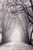 Alley to Heaven (exkeks) Tags: nebel bäume a2 aasee platanen