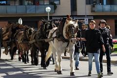 Tres Tombs (McGuiver) Tags: canon sigma70200 santjoandespí trestombs carriers cavalls cavall caballos horses tradicions traditions catalunya canon7dmarkii