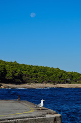 Galeb (roksoslav) Tags: nikon seagull croatia dalmatia bra 2015 postira galeb prvja afsnikkor70300mmf4556vr d5100 mostodfabrike