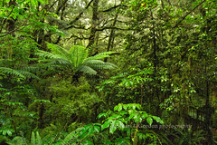 Rainforest, Milford Sound (chasingthelight10) Tags: travel newzealand mountains nature photography landscapes countryside rainforest events places things streams milfordsound fjords creeks fjordlandsnationalpark