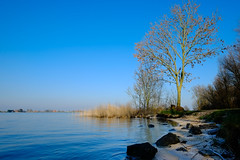 The borders of the IJsselmeer, nice in blue (Boudewijn Vermeulen) Tags: blue winter tree water sunshine angle wide velvia waterland monnickendam hemmeland