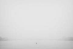 (koeb) Tags: bridge water fog grey wasser space minimal negative brücke rhine rhein mainz buoy theodor boje mayence heuss