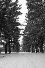 Water Works Park - 3/10 (mfhiatt) Tags: trees winter blackandwhite snow nature highcontrast iowa environment desmoines waterworkspark image23100 100xthe2016edition 100x2016 img49000216