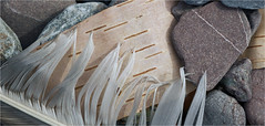 Fox River, Nova Scotia... Iscorama anamorphic (Small Creatures) Tags: beach novascotia feather bayoffundy foxriver anamorphic cinemascope isco d40 nikond40 iscorama minaschannel nikkorh85mm cumberlandcountynovascotia anamorphicmacro iscoramamacro anamorphiccloseup iscoramacloseup