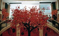 Year of the Monkey [Nikon F55 Film] (Aviator195) Tags: city tree film lights monkey iso200 nikon blossom kodak interior chinese sydney fake australia chinesenewyear newyear oldschool retro celebration f cny faux epson interiordesign v550 yearofthemonkey kodakfilm sydneycbd filmphotography filmphotos nikonf55 cityofsydney f55 filmisnotdead colorplus kodakcolorplus epsonv550 epsonperfectionv550