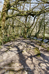 Eroded Tree Roots.  Golitha Fall National Nature Reserve (doublejeopardy) Tags: england tree cornwall unitedkingdom roots erosion naturereserve gb liskeard riverfowey golithafalls