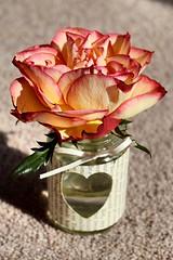 The Heart of the Rose (chris.fielder83) Tags: sunlight flower macro nature rose garden nikon athome gardenrose tabletopphotography d3300