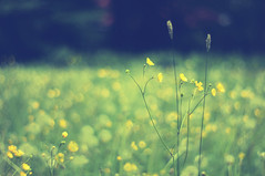 Mellow meadow (Paulina_77) Tags: flowers blue sunlight blur flower green nature beauty leaves yellow vintage lens 50mm spring nikon colorful soft mood moody colours dof purple bright blossom bokeh outdoor background magic softness smooth creative dream mother meadow illuminated depthoffield mount german ethereal m42 bloom dreamy serene shallow manual colourful fading elegant pentacon f18 sunlit delicate dreamlike tones magical daydream depth springtime selective blooming 50mm18 springlike focusing mutes 5018 d90 playoflight illimination bloomy pentacon50mmf18 bokehlicious pentacon50mm nikond90 pentacon50mm18 pola77