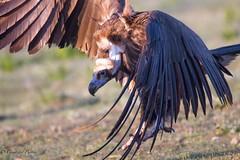 El ms Grande (Csar del Puerto) Tags: aves nocturnas