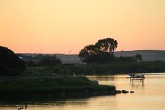 Lake Albert sunsets. Meningie #5 (robynbrody) Tags: sunset sky lake water evening dusk albert australia pelican southaustralia coorong