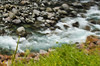 ocean ripple (SusanCK) Tags: ocean newzealand landscape susancksphoto
