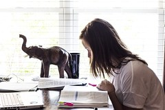 Studious (Chris B Richmond) Tags: school light white elephant window girl shirt work table book profile indoor study homework dslr studying textbook concentrate concentrating