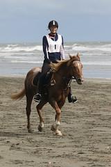 IMG_EOS 7D Mark II201604032364 (David F-I) Tags: horse equestrian horseback horseriding trailriding trailride ctr tehapua watrc wellingtonareatrailridingclub competitivetrailriding sporthorse equestriansport competitivetrailride april2016 tehapua2016 tehapuaapril2016 watrctehapuaapril2016