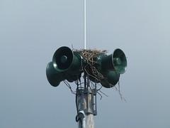 nest (Jef Poskanzer) Tags: t geotagged nest siren geo:lat=3774170 geo:lon=12250687
