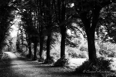 Little Red riding hood-2.jpg (Carmen Auriemma) Tags: wood trees light white black monochrome canon way landscape strada path fear tunnel direction sentiero luce 6d paura direzione