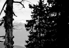 un petit bout de montagne (glookoom) Tags: light blackandwhite bw black france nature monochrome montagne grenoble landscape noir noiretblanc bokeh lumire contraste foret blanc bois chamrousse rhnealpes