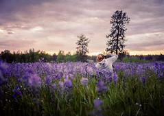 Sitting in a Field Full of Camas (SimplyAmy74) Tags: friends washington exploring adventure explore gifts pacificnorthwest wildflowers washingtonstate naturewalk camas naturelover turnbull