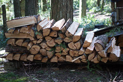 My stack of wood (kkdemien) Tags: wood exercise