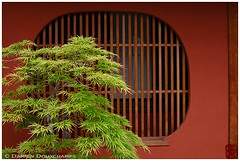 House facade in Miyagawa-cho, Kyoto (Damien Douxchamps) Tags: wood japan kyoto   kansai japon  miyagawa kinki higashiyama  roundwindow latticewindow  springfoliage greenmaple   aomomiji sukiyaarchitecture