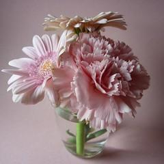 petit bouquet (peltier patrick) Tags: flowers flower fleur rose fleurs plante gerbera bouquet couleur gerberas verre carr petitbouquet tige oeillet fleursroses peltierpatrick