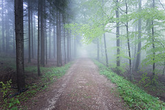 bluegreen street - Olympus OM-D E-M1 (Andreas Voegele) Tags: light forest landscape search shine olympus omd em1 foreststreet andreasvoegelephoto olympusomd omdem1 olympusem1 olympusomdem1
