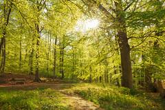Maigrn (Gruenewiese86) Tags: forest canon landscape deutschland spring grn tamron wald harz frhling 6d buche buchen 1530 wlder forestscape frhling wlder harzlandschaft