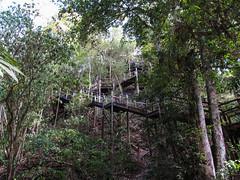"""Tikal: pour monter au sommet du Temple à la Double Tête de Serpent <a style=""""margin-left:10px; font-size:0.8em;"""" href=""""http://www.flickr.com/photos/127723101@N04/26172089211/"""" target=""""_blank"""">@flickr</a>"""