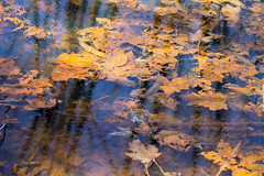 Swamp Art I (Pauline Brock) Tags: trees abstract nature water leaves spring swamp wetland