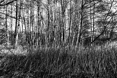 first sun (j.p.yef) Tags: autumn trees winter bw nature monochrome forest landscape seasons sw springtime yef velmede peterfey jpyef