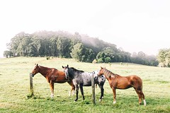 Countryside Adventures (EKoltsis) Tags: lighting morning horses beautiful fog clouds sunrise canon landscape colours country land focusaustralia canon5dmk3 canonaustralia