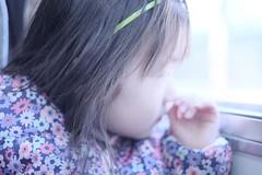 The little girl on the train ()  (Rob |  | ) Tags: flowers winter cute window girl japan train kyoto bokeh shy jacket prints littlegirl downjacket