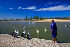 LR-160316-019.jpg (Finert) Tags: theentrance friendlyflickr pelicanfeeding 160316