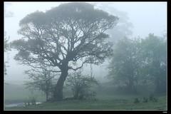 DP1U6624 (c0466art) Tags: light beautiful grass fog creek canon landscape scenery atmosphere mysterious land 1dx c0466art