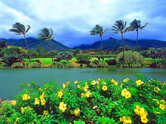 Maui Tropical Plantation, Hawaii (pakdyziner) Tags: public creative free images common domain fifcu