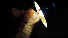 Almost got it (FX-1988) Tags: cat light lamp dark temptation curiosity htc m9 smartphone bulb fur indoor htcm9