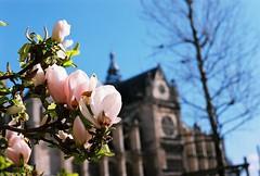 Flower at St.Eustache (lucapascotto) Tags: paris film 50mm t3 manualfocus analogic filmphotography f17 portra160 manualexposure konicaautoreflex konicahenanon