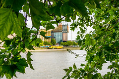 Through The Trees (Serendigity) Tags: uk england tree london unitedkingdom houseboat riverthames lowwater repairs
