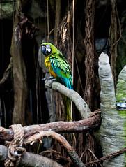 Moody gardens... (kaiteelucksingh) Tags: nikon parrot moodygardens nikon2470mm nikond750